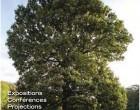 Auprès de nos arbres