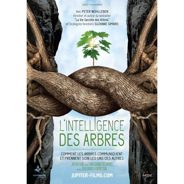 l-intelligence-des-arbres-68816-600-600-F