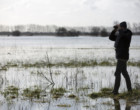 Paysages du marais, à la rencontre des oiseaux